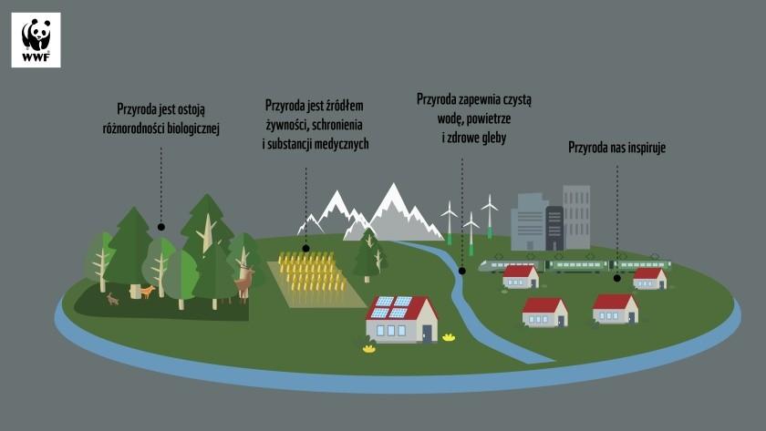 Grafiki zacielenienie gosopdarki 01 2 Ci gnie cz owieka do lasu Natura a pandemia koronawirusa