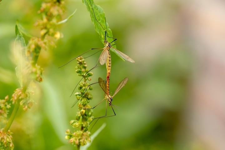 Komary Zapomnij o komarach 8211 jest lawenda